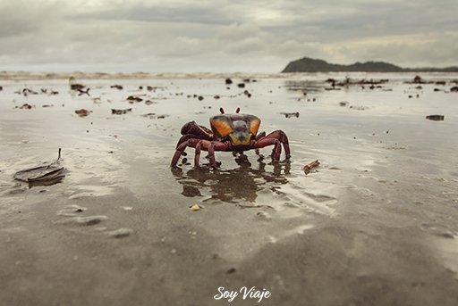 Cangrejo viendo el mar