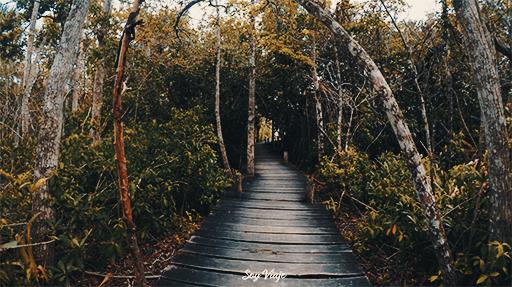 Mangle en Laguna Kaan Luum, Tulum