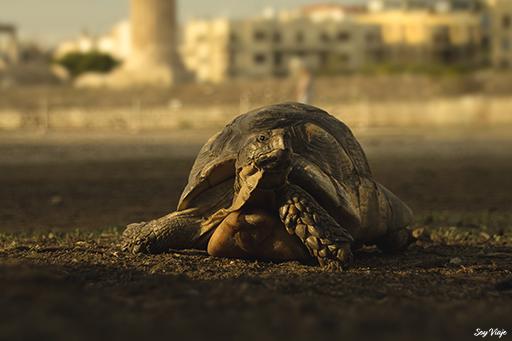tortuga en Atenas