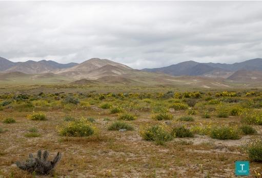 Copertina Desierto Florido