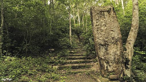 Jungle Calakmul