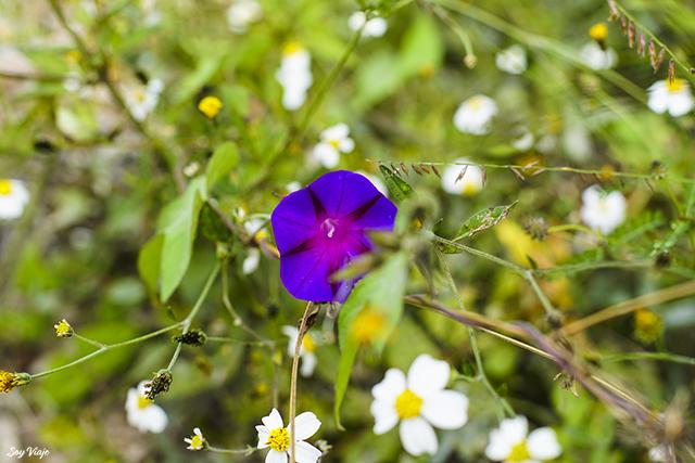 Flores en Hierve el Agua